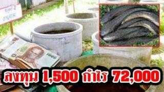 อาชีพพารวย วิธีเลี้ยงปลาช่อนในบ่อซีเมนต์เลี้ยงง่าย กำไรดี ได้กำไรเยอะ